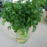square foot gardening 2011 6 parsley 150x150