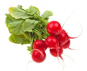 square foot gardening radishes 300x246